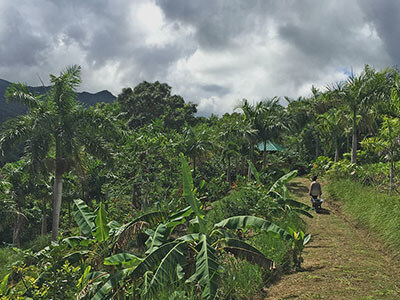 """Organic farm with El Yunque Lodging"""