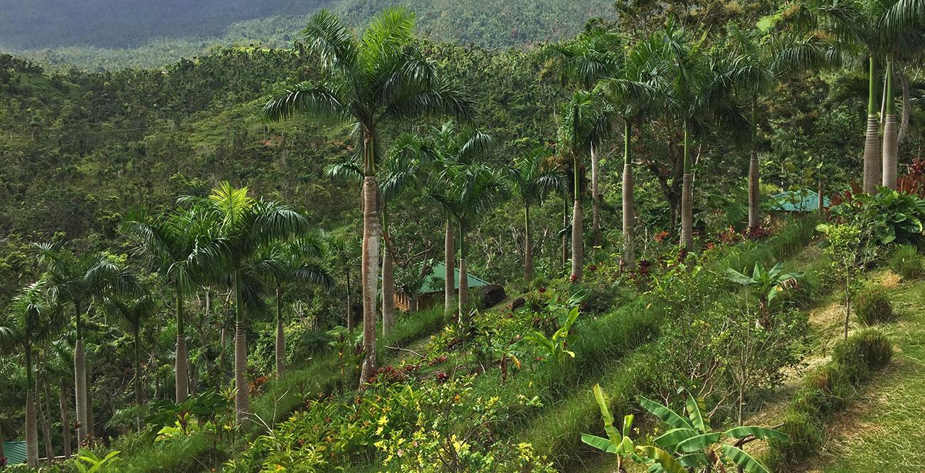 PR Treehouse, Yunque Hotel, PR Rainforest Hotel, PR Eco Resort, PR Ecolodge, Yunque Lodging and PR Glamping